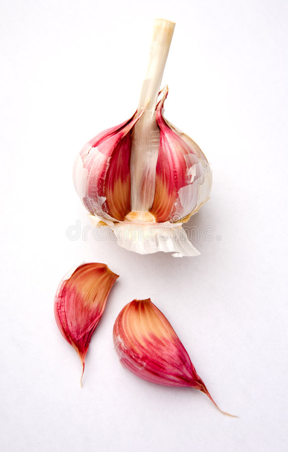 Download Garlic bulb and cloves stock photo. Image of background - 1311400