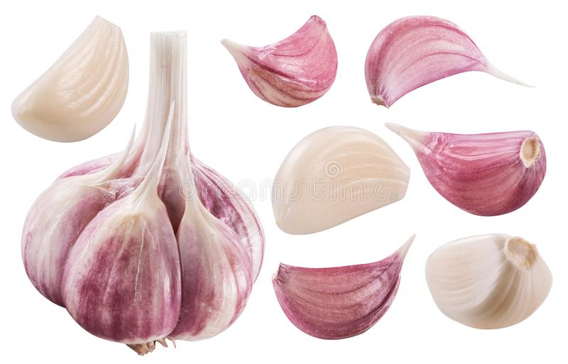 Garlic bulb and garlic cloves. Clipping path. Garlic bulb and garlic cloves on white background. File contains clipping path royalty free stock photo