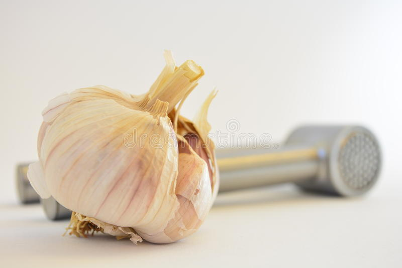 Garlic Bulb Stock Photos