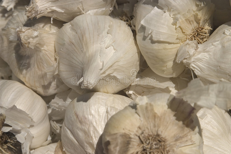 Download Garlic bulbs stock image. Image of flavor, farmers, seasoning - 160109