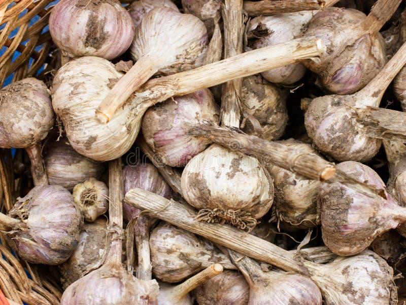 Download Garlic bulbs stock image. Image of bulb, food, garden - 6634957