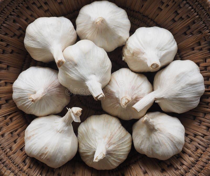 Garlic bulbs stock photos