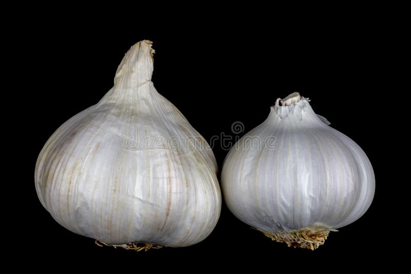 Garlic Bulbs Isolated on a Black Background stock image