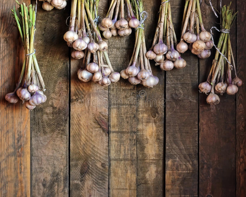 Garlic bunches against from boards stock image