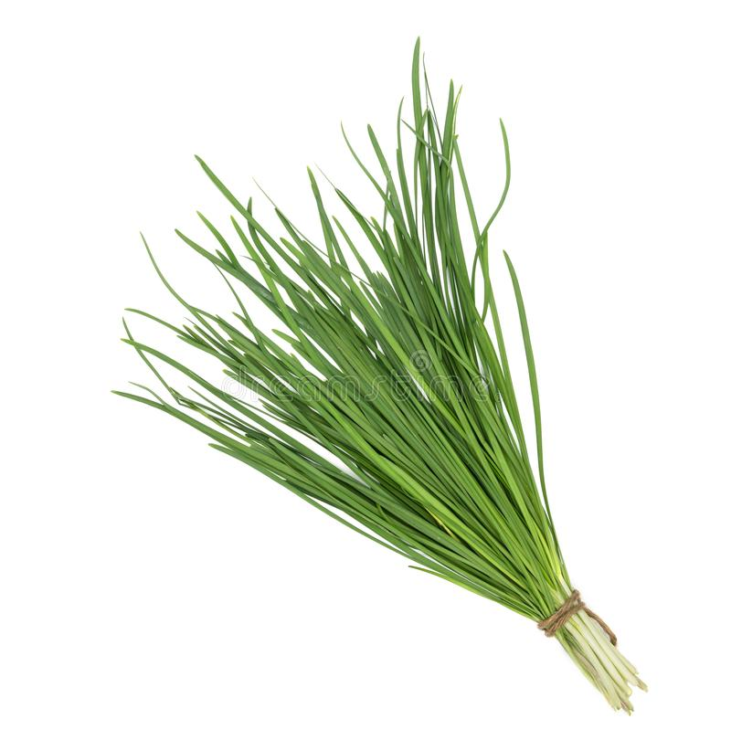 Garlic chive isolated on white background,top view. Garlic chive isolated on white background ,top view royalty free stock photo