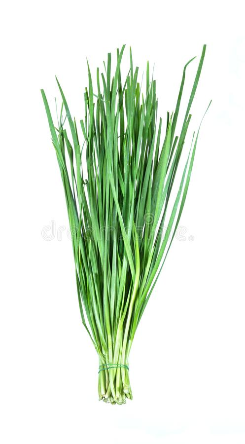 Garlic chive on white. Garlic chive isolated on white background stock photography