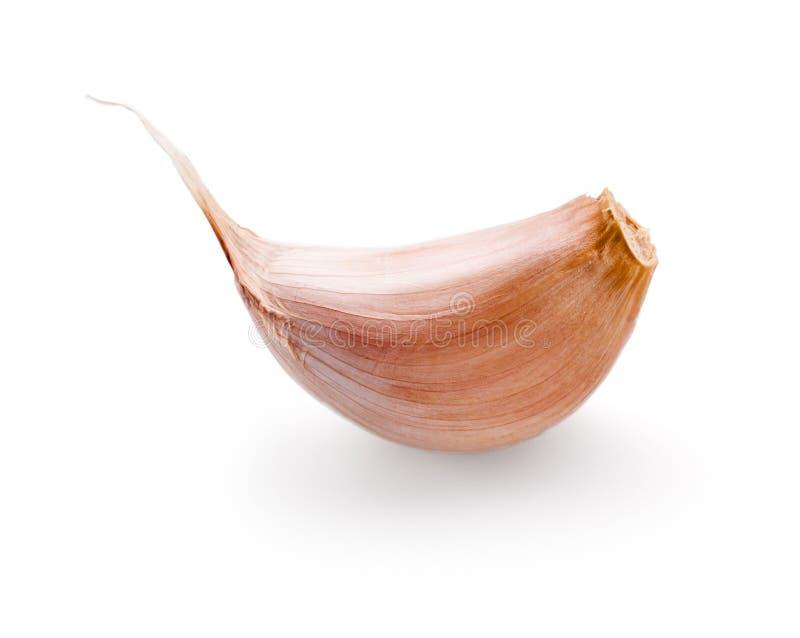 Garlic clove on white. Background stock photography