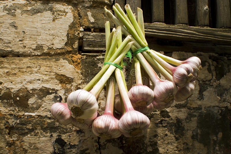 Garlic cloves hanging out of a window royalty free stock photo