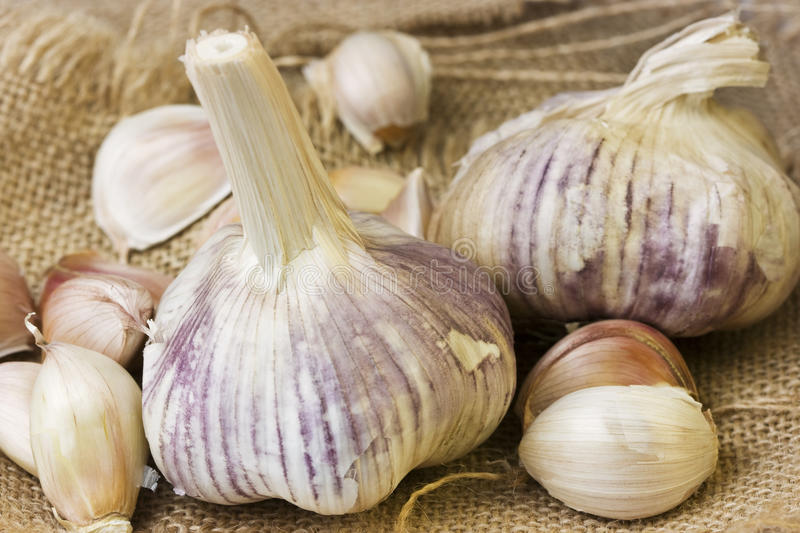 Garlic cloves on hessian. Garlic cloves on a hessian sacking background stock photos