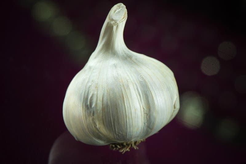 Garlic on dark background royalty free stock photography