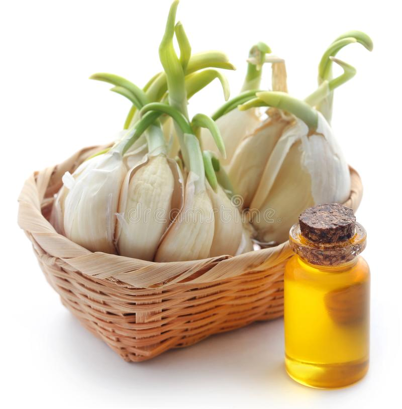 Garlic with essential oil in a bottle royalty free stock photography
