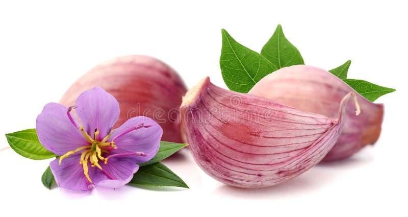 Garlic. royalty free stock image