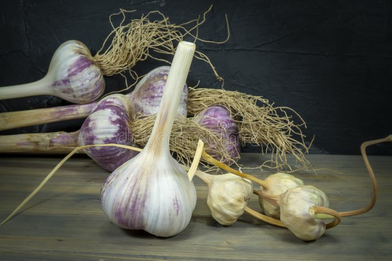 Garlic harvest, bulbs and bulbils. On a rustic table stock photography
