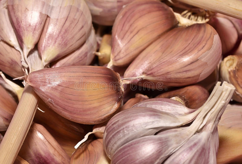Garlic. Harvested pile of cloves on background stock photos