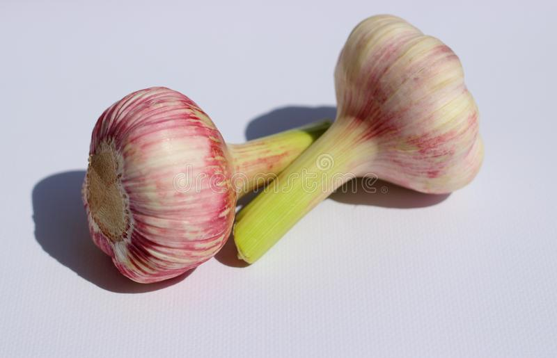 Isolated garlic heads stock photography