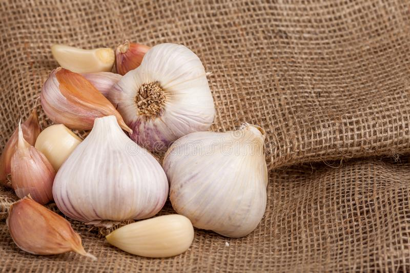 Garlic horizontal banner. Eco farming concept. Whole garlics and cloves on piece of sacking textured background. Organic food. royalty free stock image