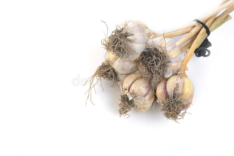 Download Garlic isolated on white stock photo. Image of directly - 11170790