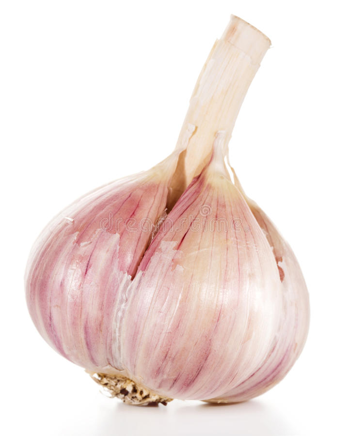 Garlic. Isolated on white background stock photo