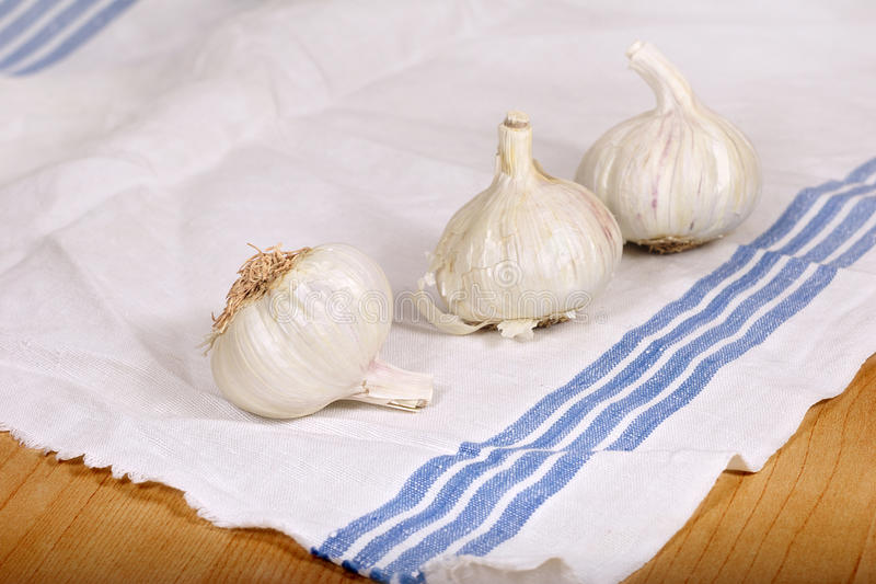 Garlic on kitchen towel. White Garlic on kitchen towel stock photos