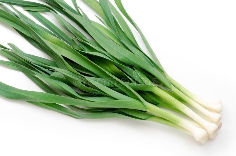 Garlic leaf royalty free stock images