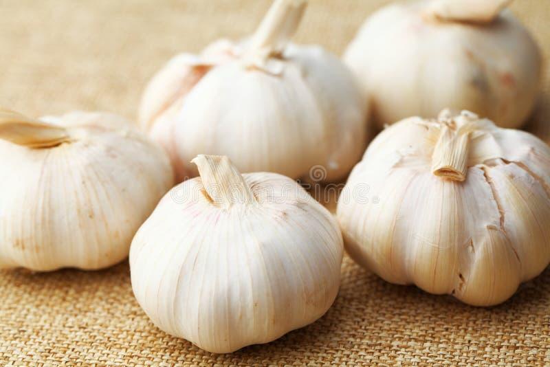 Download Garlic on linen stock photo. Image of closeup, root, food - 30897212