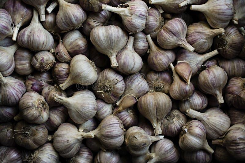 Garlic. A lot of garlic for planting. Purple garlic royalty free stock image