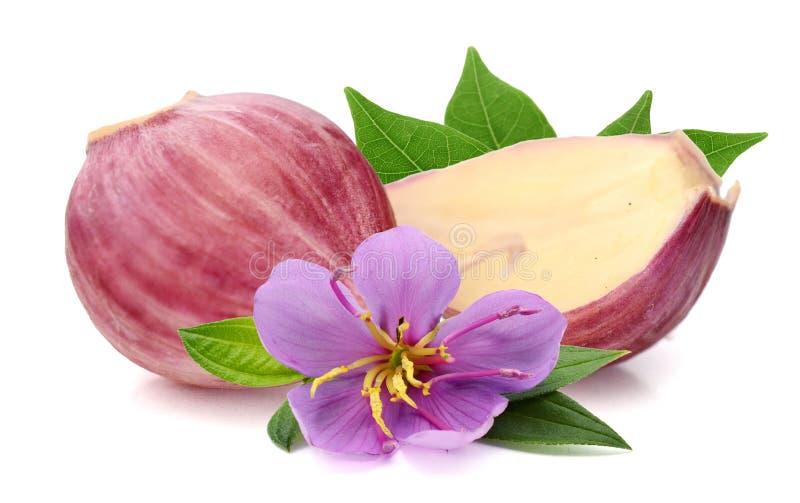 Garlic. stock images