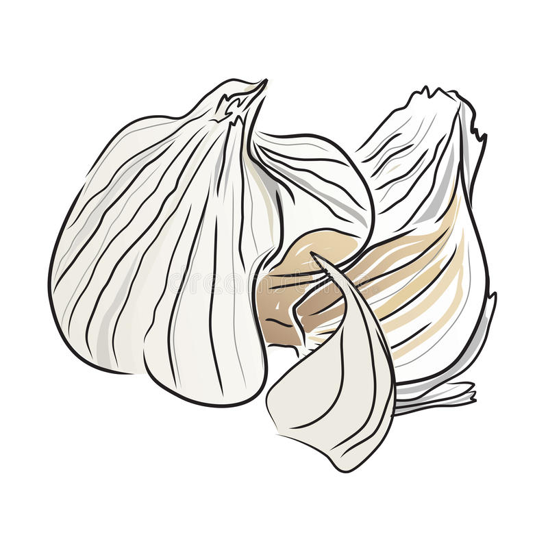 Download Garlic Open Royalty Free Stock Images - Image: 18372079