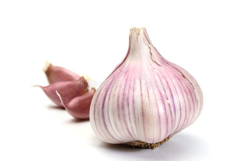 Garlic over a white background stock photography
