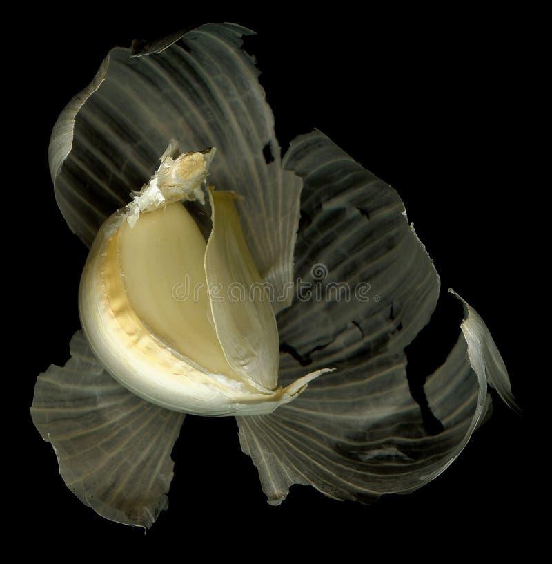 Download Garlic Peel Healthy Element Stock Image - Image: 504163