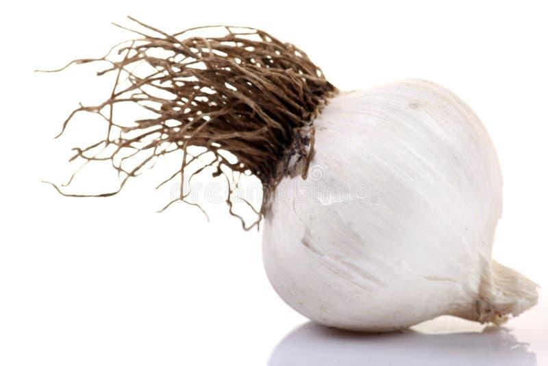 Garlic pod. Beautiful shot of garlic pod on white background royalty free stock photography