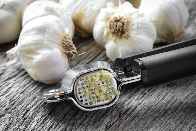 Garlic Press and Garlic Bulb Close Up on Rustic Wood royalty free stock image
