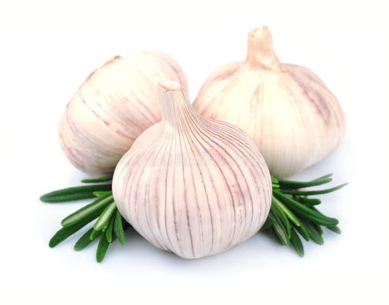 Garlic with rasemary. Isolated on white background stock image