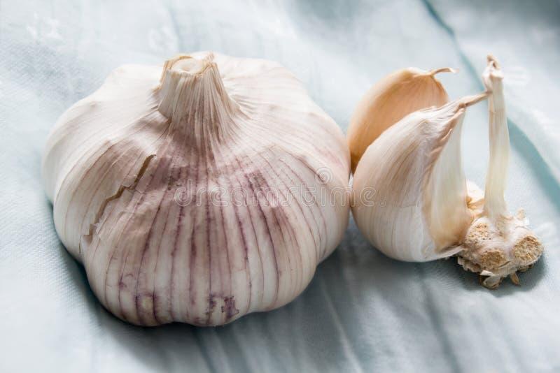 Garlic stock images