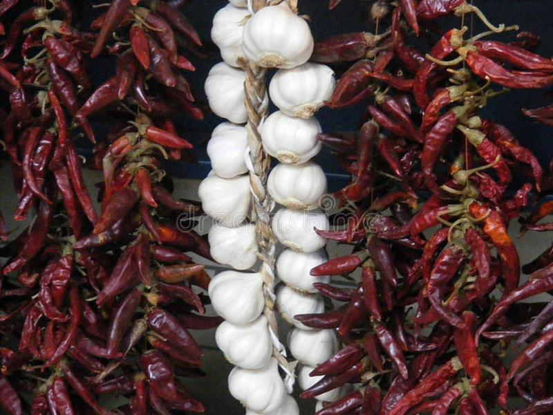 Garlic and Red Chilli Peppers hanging in the Sun. Chili pepper pods, which are berries, are used fresh or dried. Chilies are dried to preserve them for long stock photo