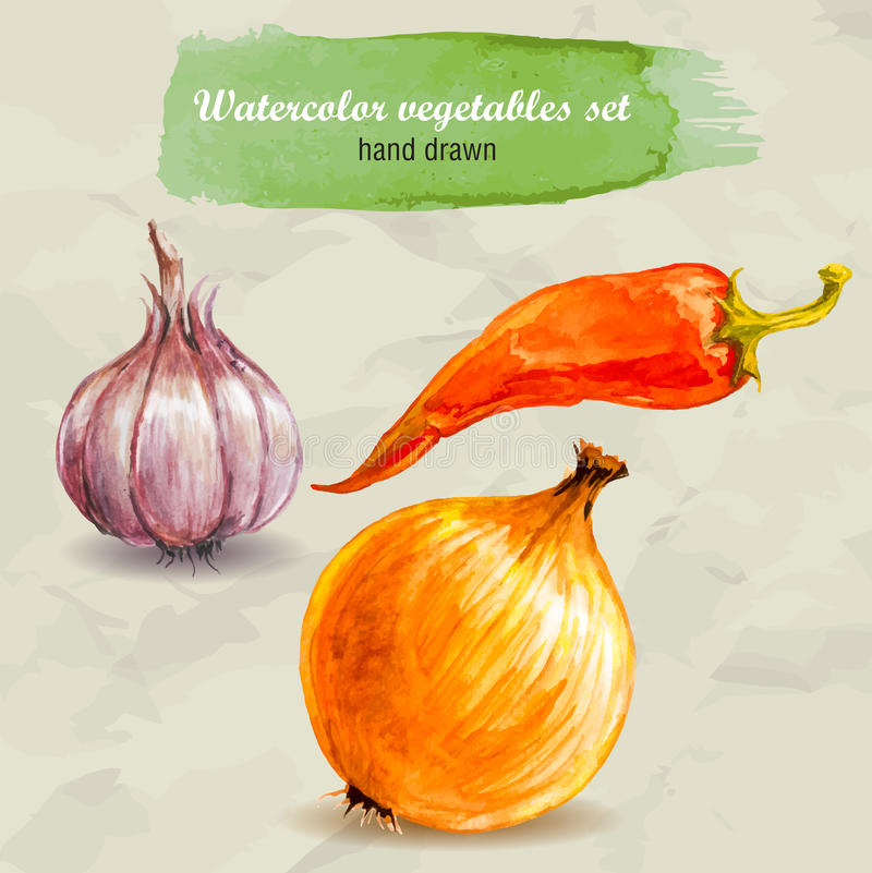 Garlic, red hot pepper and onion. Vector watercolor hand drawn vegetable set. vector illustration