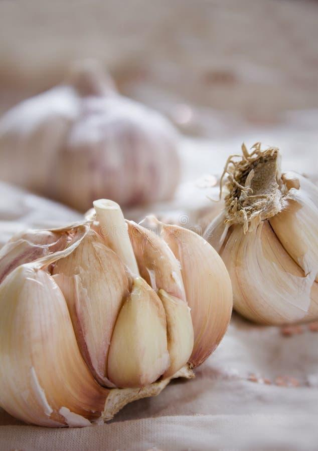 Garlic. Separate raw garlic on the table royalty free stock photo