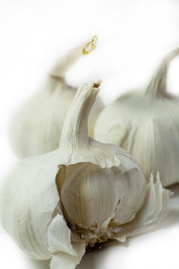 Garlic on white stock photo