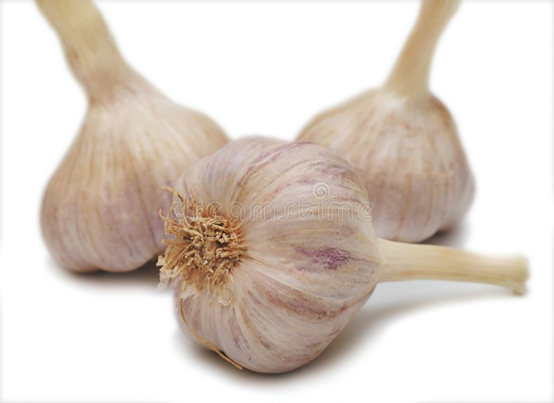 Garlic on white background royalty free stock image