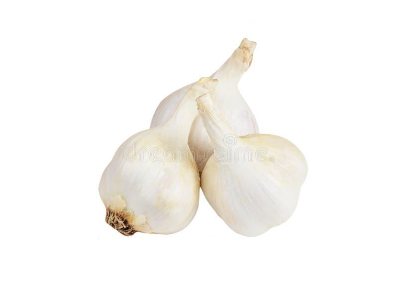 Garlic on white royalty free stock image
