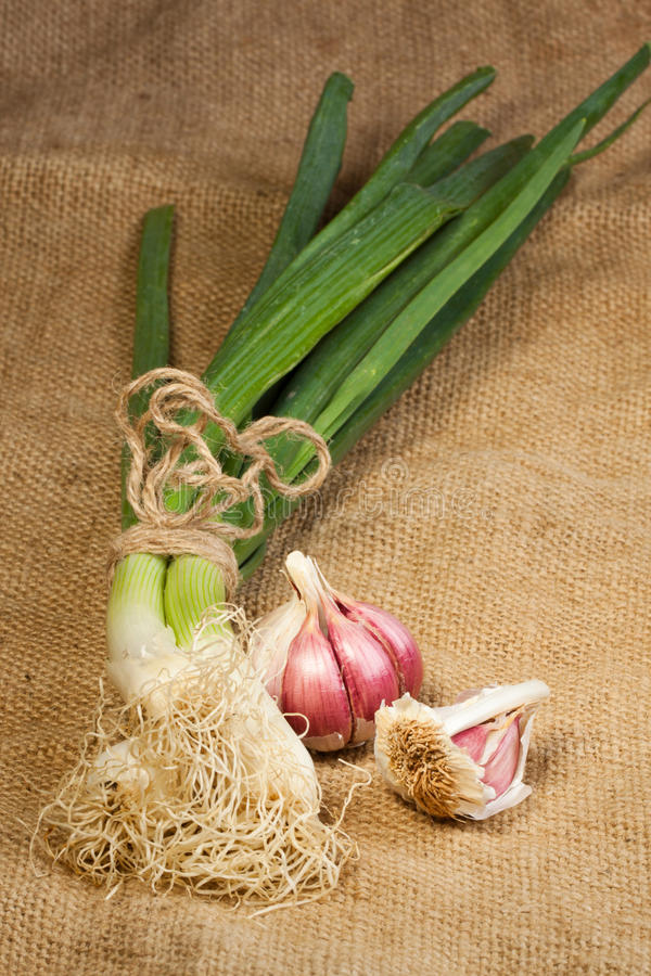 garlics葱 库存照片