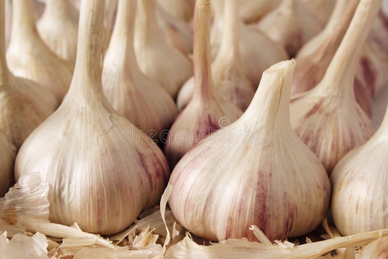 garlics obraz royalty free