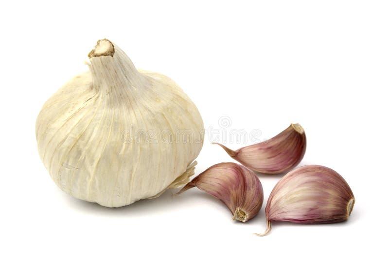 Garlics lizenzfreie stockfotos
