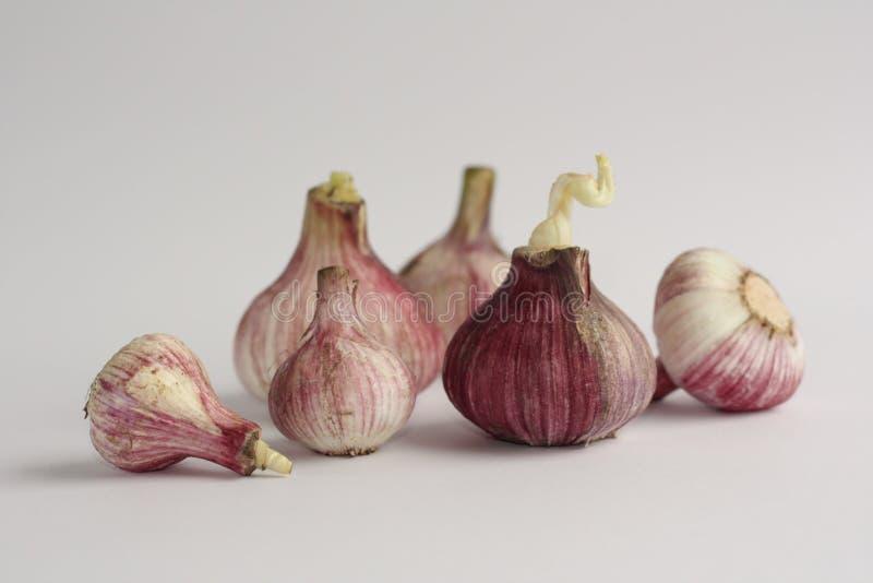Garlics lizenzfreies stockbild