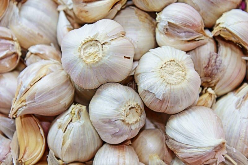 garlics 免版税库存照片