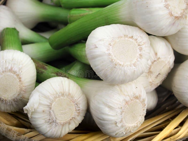 Garlics im Weidenkorb lizenzfreie stockbilder