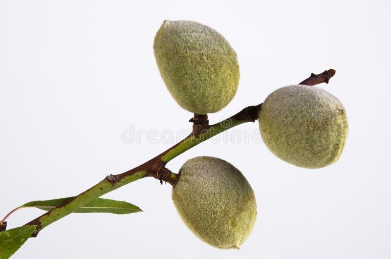 Garlicsmortier stock afbeeldingen