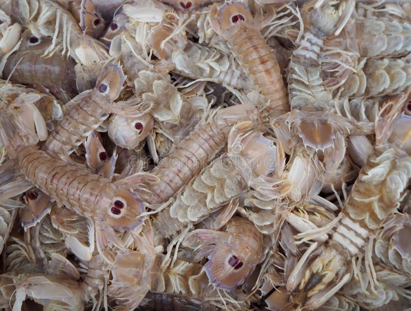 Garnalen, octopus en pijlinktvis De garnalen van Squillabidsprinkhanen, of overzeese gevangen cicaden, enkel royalty-vrije stock afbeelding