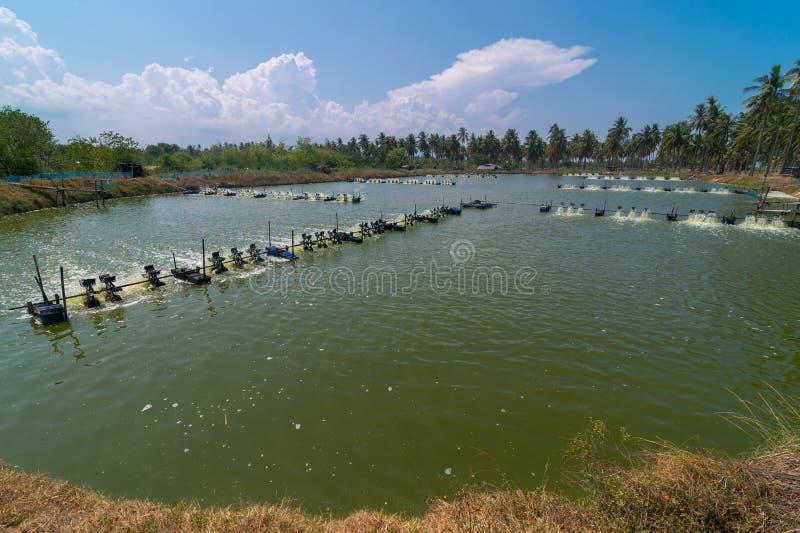 Garnalenlandbouwbedrijf, Thailand royalty-vrije stock afbeelding