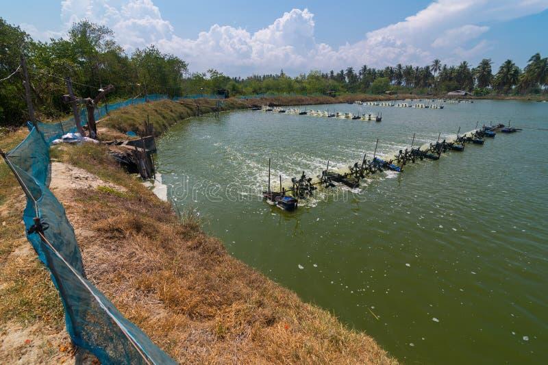 Garnalenlandbouwbedrijf, Thailand royalty-vrije stock afbeeldingen